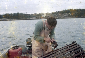 Dad measuring a lobster: 1950's