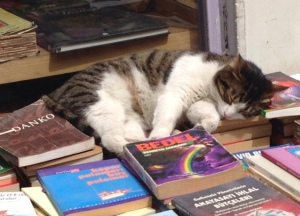 Cat in Bookstore: Istanbul, Turkey, April 2014