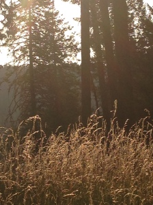 Early morning on Moscow Mountain: Moscow, Idaho, July 2014