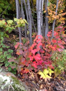 Upper Peninsula Woods: Autumn 2014