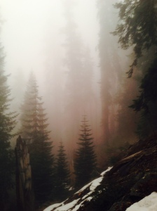 Out of the Mist: Sequoia National Park, January 30, 2015