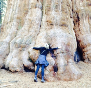 Helen Haskell Remien and General Sherman:  Sequoia National Park, January 31, 2015