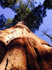 Sequoia National Park: January 31, 2015