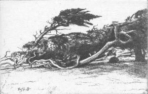 Windbent Cypress: Ernest Haskel, circa l 1918 -- 1919