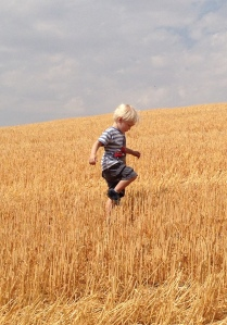 Viren in the wheat field: Moscow, Idaho, August 2015